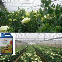 VENATTO Improving Plant and Root Development