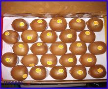 factory price plastic fruit tray/plastic fruit tray kiwi fruit/plastic tray for fruit