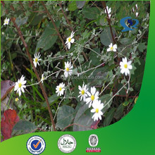 pyrethrin insecticide, pyrethrum insecticide