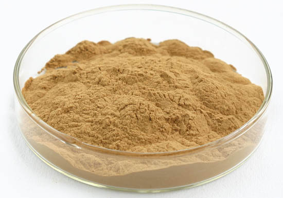 China Supplier 100% Natural Hedera Helix extract, Ivy extract powder with 10% Hederacoside C