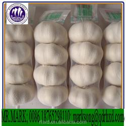 china cheap garlic Certified GAP/ KOSHER/ HALAL/HACCP 5.0cm pure white garlic/fresh white garlic/fresh Allium sativum
