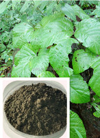 Thailand Black Pueraria Mirifica Powder Promoting Energy