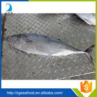 BQF Whole round Sardine Fish and hilsa sardine