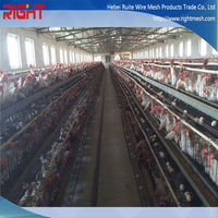 chicken cage for poultry farm for nigeria / chicken farm equipment