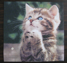 Beautiful and cute cat for animal items picture printed napkins