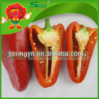 Sweet red/yellow pepper best fresh green capsicum