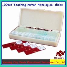 100 pcs enseignement de lames histologiques