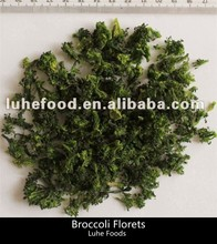 natural size dehydrated xinghua broccoli florets/ad broccoli handmade