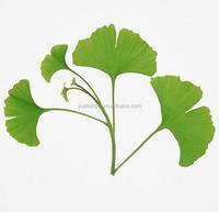 USP/EP Standard Ginkgo Biloba Extract Ginkgoflavon Glycosides24%, Terpene Lacosides6%