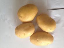 Wholesale High quality Fresh holland potato supplier