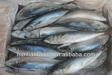 200-300seafrozen pacific mackerel