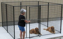 galvanized 6ft dog kennel cage