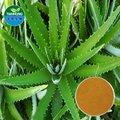 A base de hierbas y extracto de aloe/polisacárido, aloína, acemannan