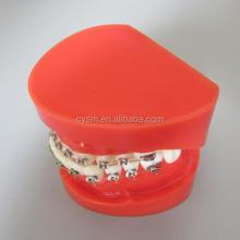 Dental Lab Dental Study Tooth Model
