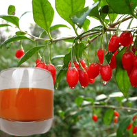 100% wolfberry juice concentrate goji berry juice concentrate