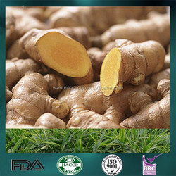 2015 High Quality New Crop Fresh Ginger Waiting for The Ginger Buyer