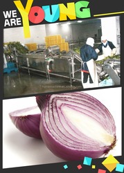 Hot sale! stainless steel fruits/onions processing line