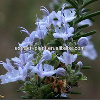 Hot sale Rosemary Extract Water/Grain alcohol