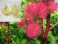 flavored castor oil extraction, castor oil manufacturers