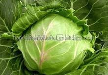Fresh round green cabbage