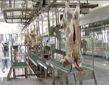 halal meat processing slaughterhouse