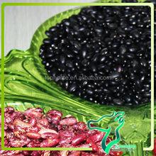 2013Crop Dried Black Kidney Beans/ Fermented Black Bans Wholesales Cooking Canned Beans Size/100g 440-460pcs