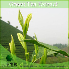 Red Brown Green Tea Herbal Extract from 3W Botanical Brand