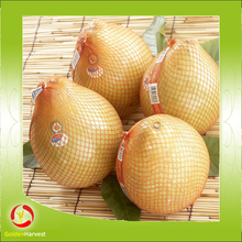 Fresh Sweet Pomelo With Best Price From China For Export