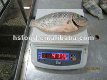 China Origin Discount Frozen Black Tilapia Fish For Sell