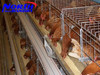 Full accessories Chicken Shed Cage including drinker system