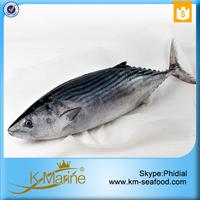 New Season of Tuna Fish