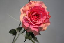 factory decking fake black rose china decorative artificial flower