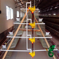 full automatic layer chickens poultry control shed sold abroad