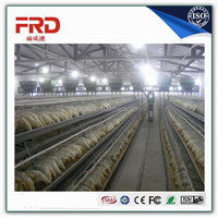 Chicken Use stainless steel material chicken cage of galvanized wire mesh