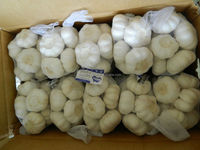 Chinese Jinxiang Fresh Garlic 500g/bag