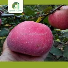fruits rich vitamin D, apple fruit, fuji apple wholesale exporter