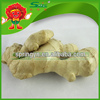 Ginger and garlic export company China ginger exporter Chinese mature super ginger