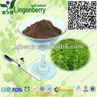 Fda picada de raiz de urtiga extrato 3,4- divanillyltetrahydrofuran para produtos de nutrição desportiva