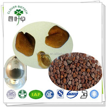20% Total Saponins Hot Sale Fenugreek Seed Extract powder