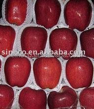 Dark Red Huaniu Apple