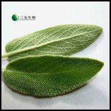 Natural Salvia officinalis Extract ( 15% Carnosic Acid )