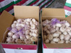 New crop fresh red garlic from cold store