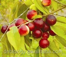 Natural camu camu fruit / camu camu powder /camu camu extract Camu Camu fruit Extract / VC 20% 25% HPLC