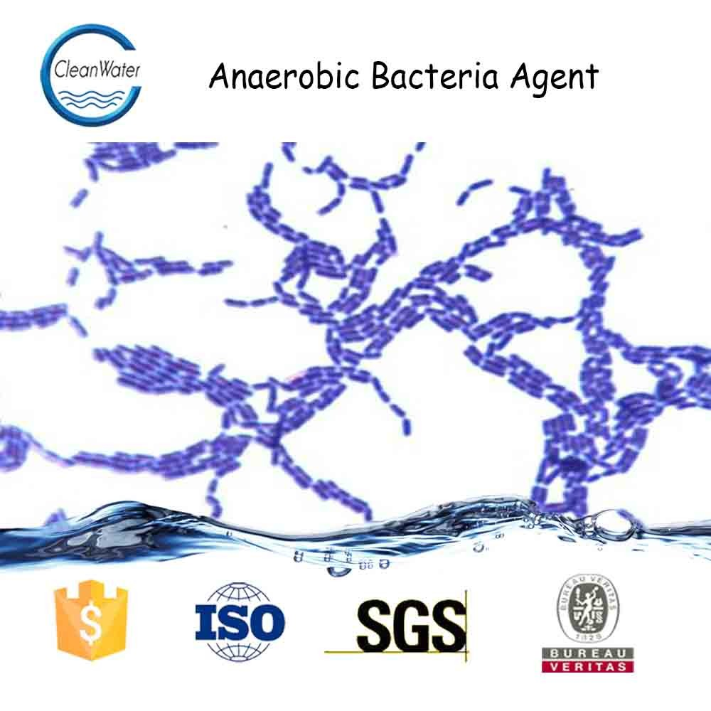aerobic bacteria associated with septic abortion Abortion associated with infection in siriraj hospital aerobic bacteria and the results were all negative the hospital stay ranged from 2 to 24 days background: septic abortion is still a challenging problem and a major cause of maternal mortality and morbidity in developing countries.