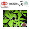 Food Grade Damiana Leaf Extract Powder / Dried Food Powder Damiana Herb Leaf Extract /Aphrodisiaca Extract