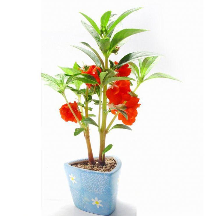 handicraft cheap plant pots business gifts large plastic plant pots
