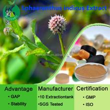 Villi Dai Xing grass/Sphaeranthus indicus L. Extract powder supplier /top quality SphaeranthusLinn/africanus/Asteraceae