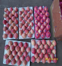 apple fruit, fresh apple packed 9kg carton ,qinguan apple