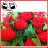 Small Fruit Decoration High Simulation Artificial Fruit Strawberry