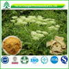 BV certificated factory supply lower price high purity Angelica P.E.